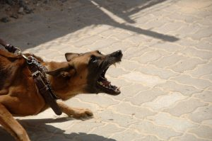 Dog Bite Injury San Diego